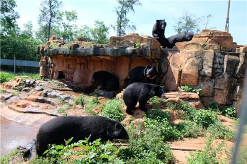 Come and enjoy a weekend at Hainan Tropical Wildlife Park