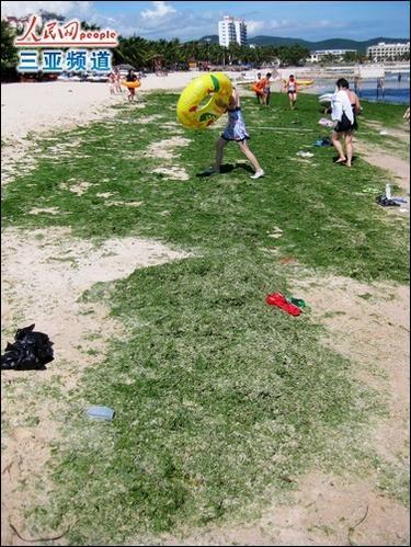 Green algae invades Sanya's Dadonghai Beach