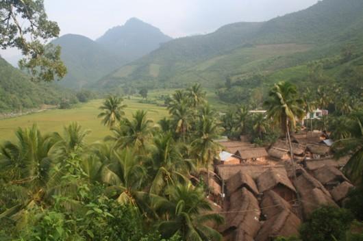 Hainan Forest