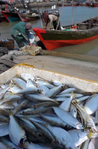 Hainan begins 2.5mth-long annual summer fishing ban