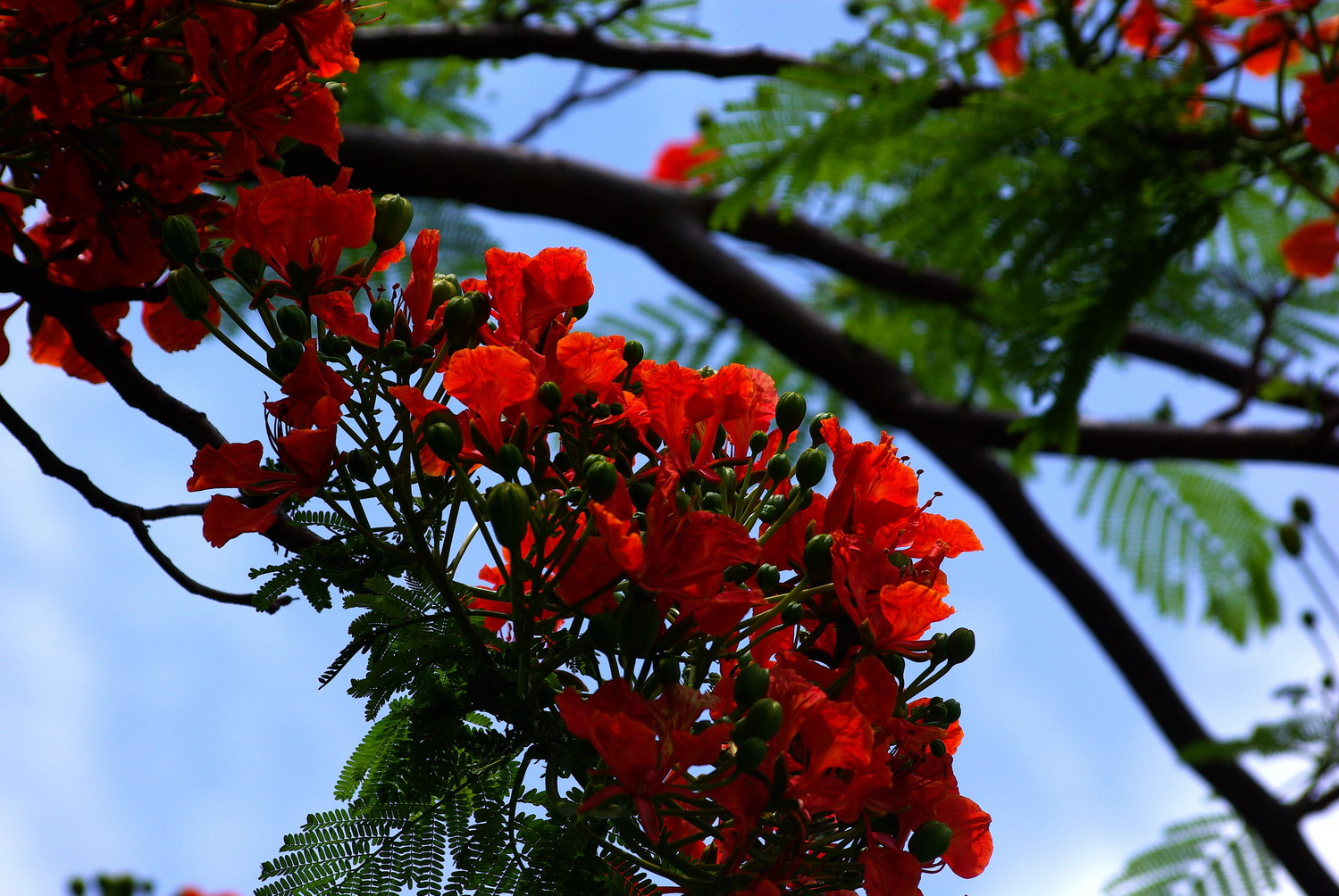 Flowers in blossom as summer comes in Sanya