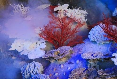 Hainan coral hall