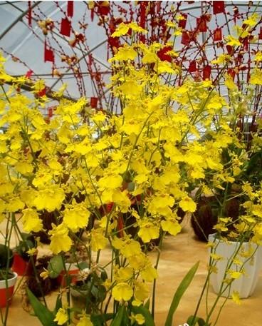 Sanya Orchid World