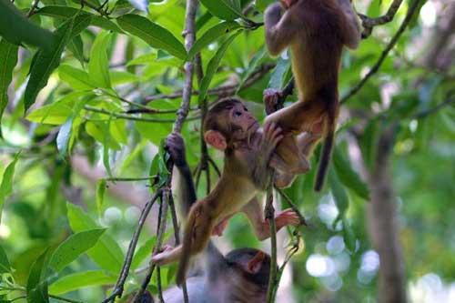 Nanwan Monkey Island, a paradise for protected macaques in Sanya