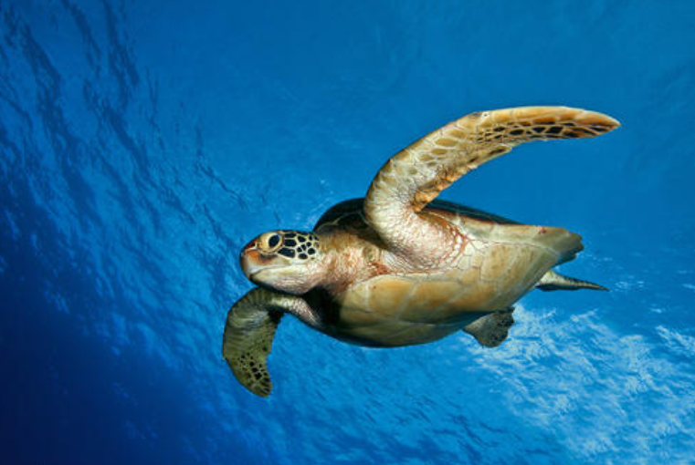 6 Hainan fishermen held in Philippines for illegally hunting sea turtles