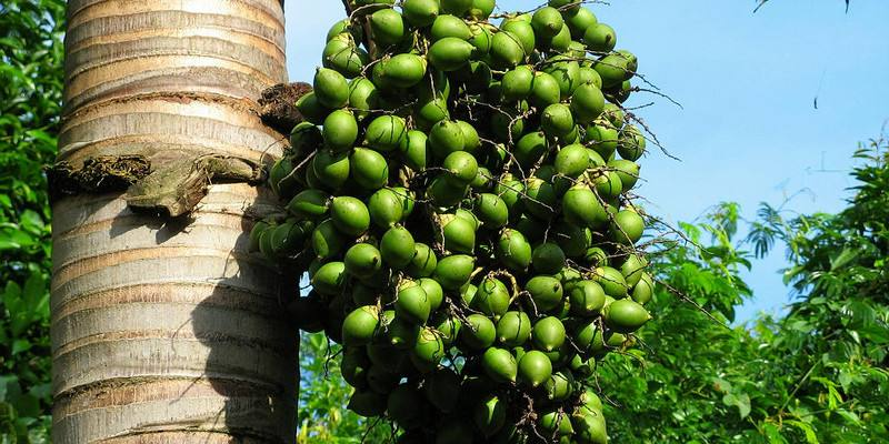 A taste of betel-nut culture in Hainan