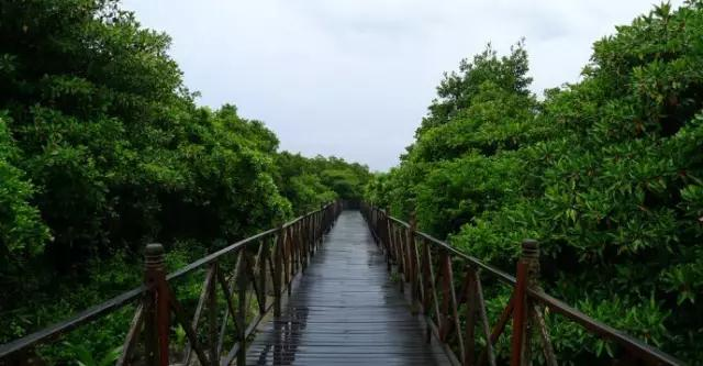 Enjoy biking in Hainan via four green cycleways